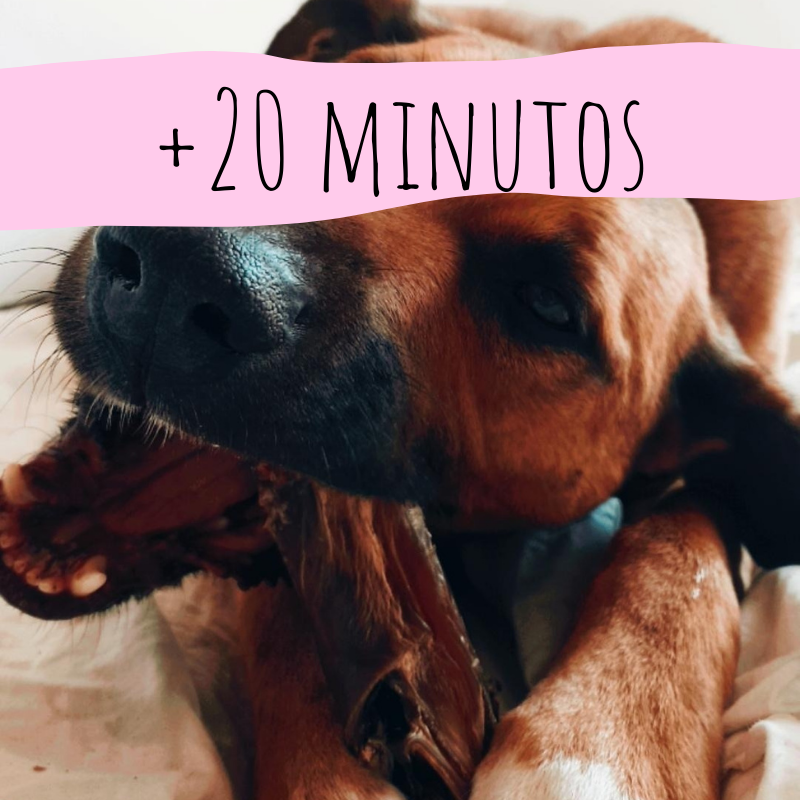 +20_snacks_naturales_perros_gatos